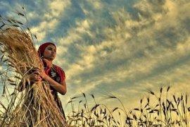 CHP'li Özcan: Çiftçi kadınların sigortalarının 3'te 2'sini bakanlık ödemelidir!