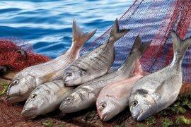 """""""Kılıç Deniz Ürünleri, Rusya'ya balık ihracatında lider konumda"""""""