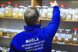 Yerel Tohumlar Muğla'dan üretim Türkiye'den