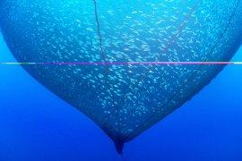 Balık fotoğrafı yarışmasının kazananları belli oldu