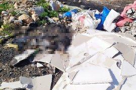 1'i yanmış 2 köpek cesedi bulundu