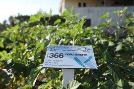 Türkiye'nin 80 İline Yerel Tohum Muğla'dan
