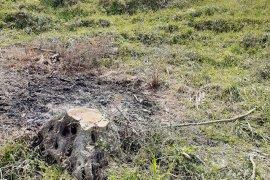 Kesilen 600 zeytin ağacına 110 bin lira ceza