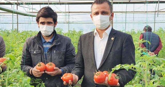 CHP'li Erbay: Rusya'ya domates ihracatı önündeki kota engeli kaldırılmalıdır