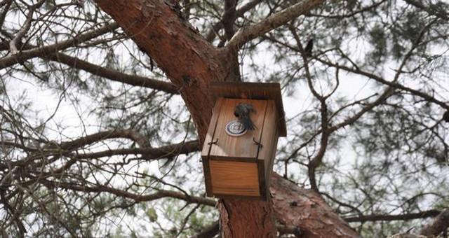 Mezarlıklarda kuş popülasyonu artıyor