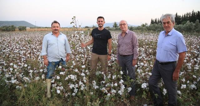 Milas'ta ilk pamuk hasadı yapıldı