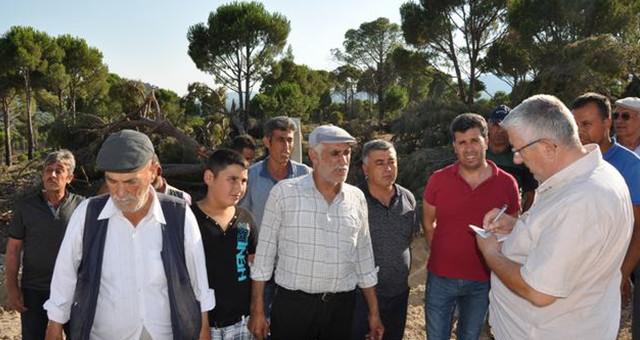 Köylüler, Fıstık Çamlarının Kesilmesine Tepkili!..