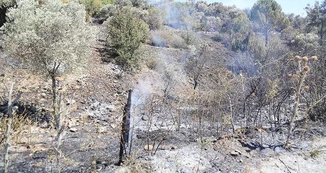 Orman yangını 3 saatte söndürüldü