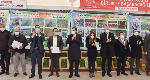 Tarım İl Müdürlüğü Ören'de 300.000 Anadolu Adaçayı fidesi dağıttı