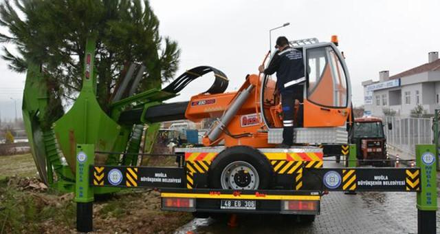 Büyükşehir 280 ağacı yeni yerlerine nakletti
