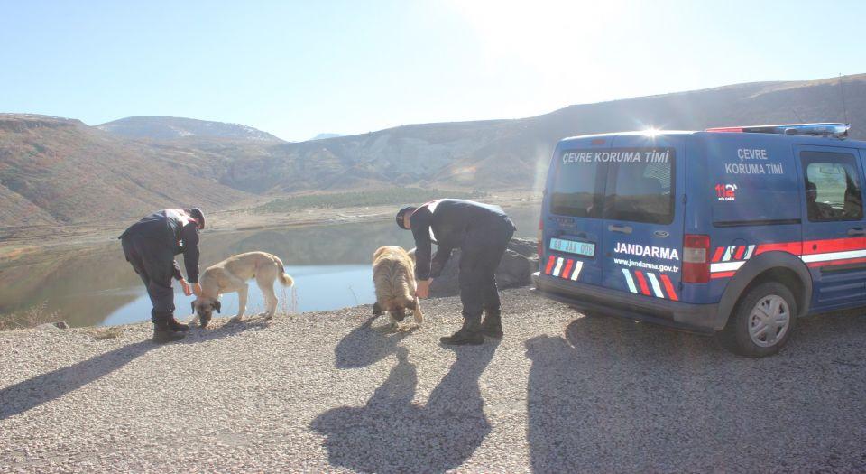 Aksaray Jandarma'dan Can Dostlara Yardım