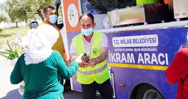 Milas Belediyesi üreticiden aldıklarını vatandaşa dağıttı