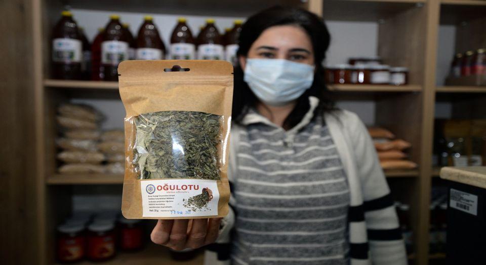 Bursa Uludağ Üniversitesi'nin Bitki Çayları Şifa Dağıtıyor