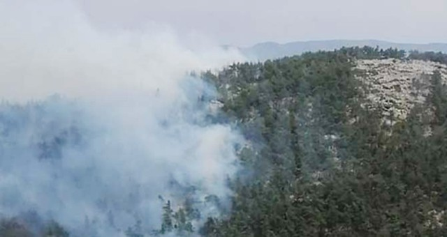 Bu kez fesleğen ormanları yandı!..