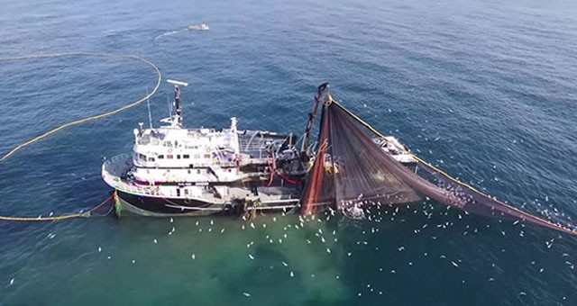 Balıkçılıkta av yasağı bitiyor; 1 Eylül'de denize açılacaklar..