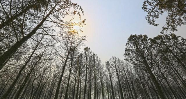 Büyükşehir'den Muğla orman yangınları son durum raporu
