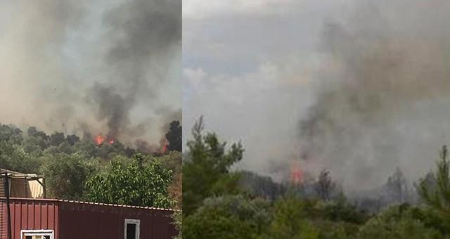 Kıyıkışlacık'ta orman yangını…