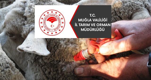Medikal malzeme ve koyun keçi çiçek dozu aşısı alınacaktır