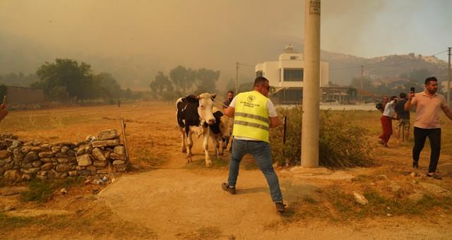 Milas Belediyesi yangın felaketinde vatandaşın yanında