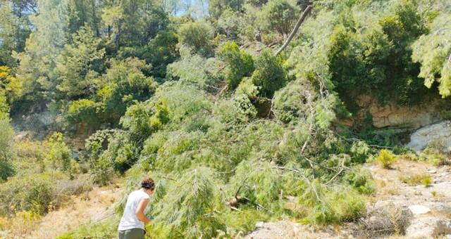 SKANDAL!.. Yangın söndürmek için yardıma gelen ekiplere, yangından dört kilometre uzak Akbelen'deki çamları kestirdiler!..
