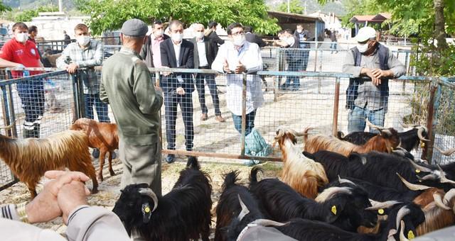 Bayır hayvan pazarı açıldı