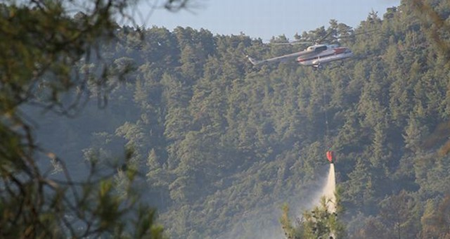 Milas ve Bodrum, Orman Yangınlarıyla Sarsıldı..