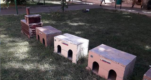 Kedi evleri sahiplerini bekliyor