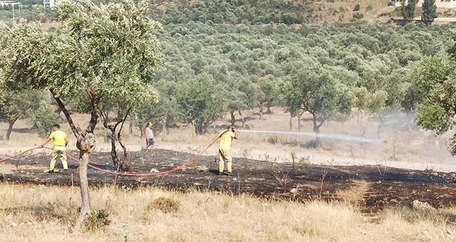 Milas Arena'nın çevresi yandı