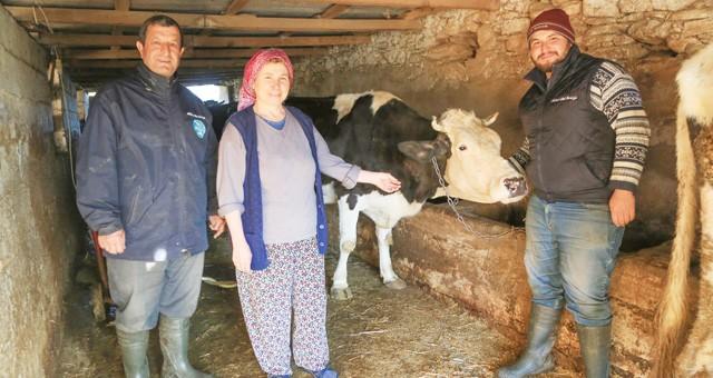 Üreticilerin kaderi Süt Birliği ile değişti