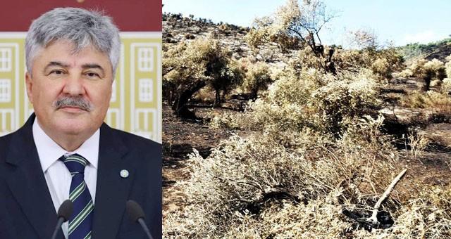 Metin Ergun, yanan zeytinlikler hakkında önerge verdi..
