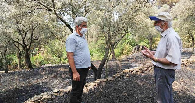 Kılavuz'da 20 hektar zeytinlik ve orman yandı