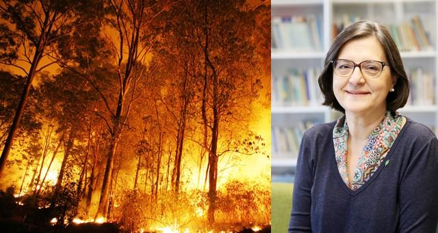 Türkiye'de yanan orman alanlarının