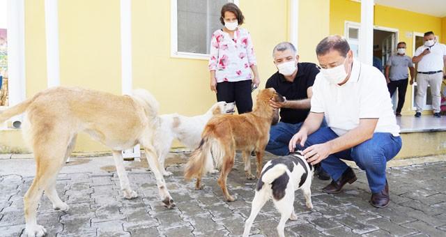 Başkan Tokat, hayvan barınağını ziyaret etti