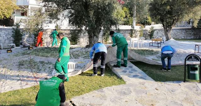 Milas Belediyesi zeytin toplamaya başladı..