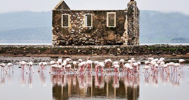 Tuzla Sulak Alanı ve Çevresi kesin korunacak hassas alan ilan edildi