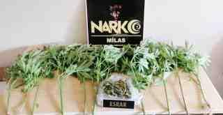 Milas'ta narkotik operasyonları..