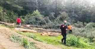 """Ormanlar """"ağaçlandırma"""" adı altında kesilerek, özelleştiriliyor mu?"""