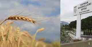 TMO Milas'ta buğday ve arpa alımına başladı