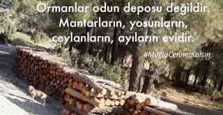 Çevreciler, orman kıyımına karşıbasın toplantısı düzenleyecek